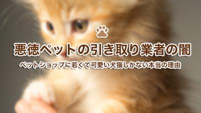 ペット ショップ 売れ残り 猫